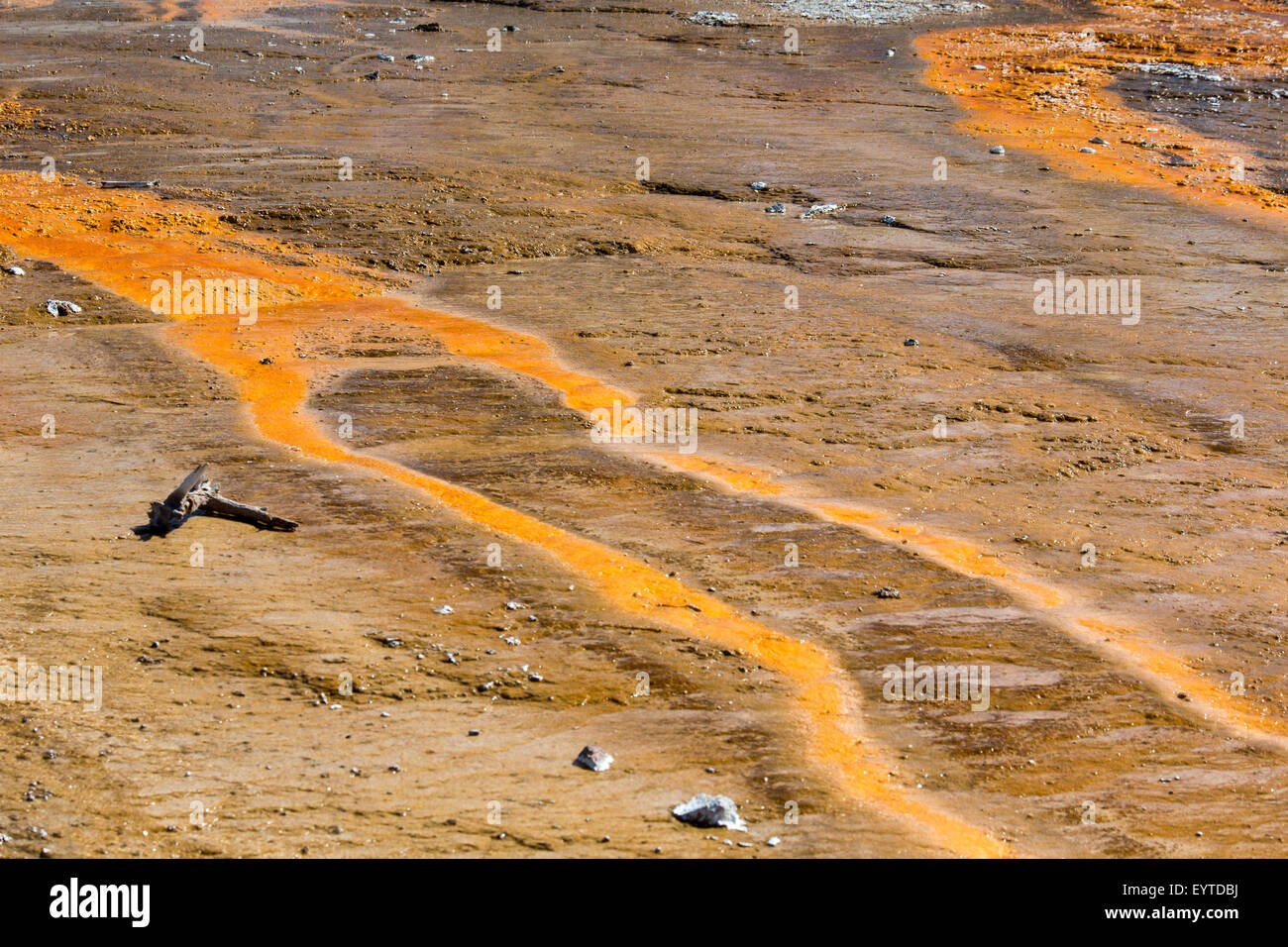 Yellowstone National Park, Wyoming - Runoff from hot springs in Yellowstone's Lower Geyser Basin. - Stock Image