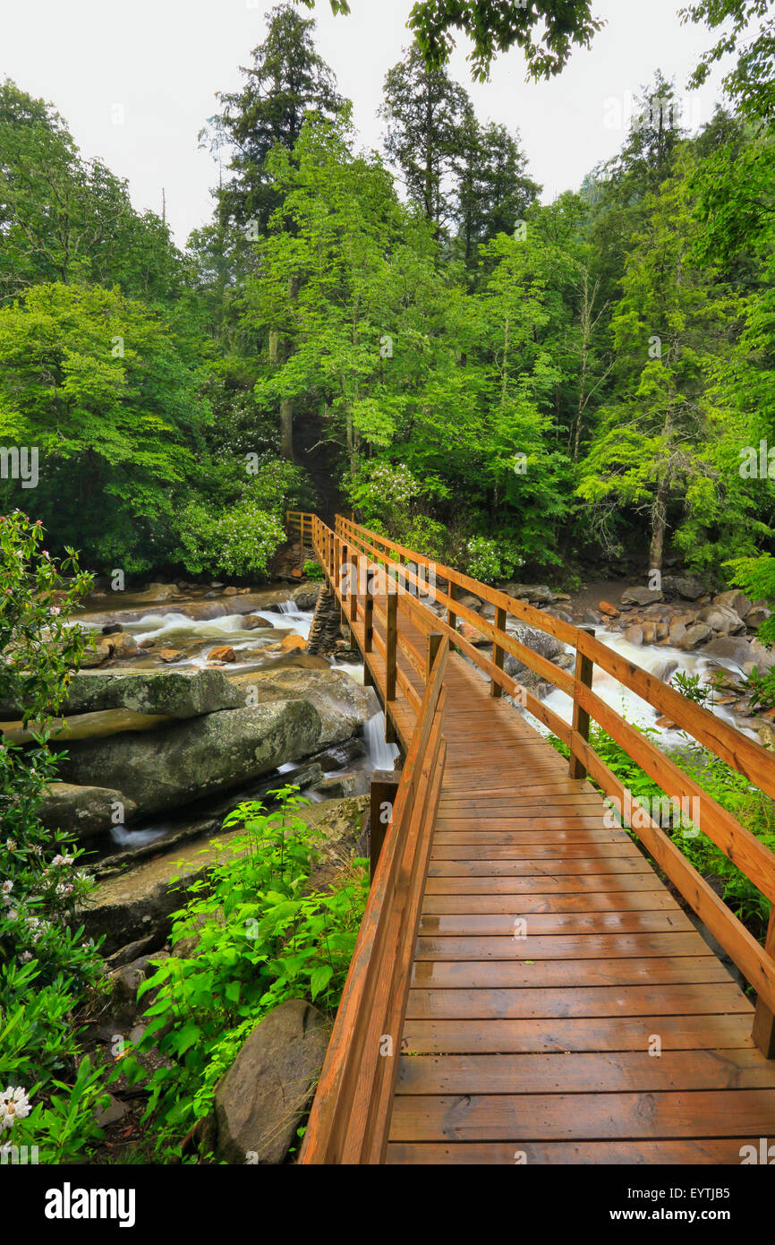 Footbridge, Chimney Tops Trail, Greenbrier Area, Great Smoky Mountains National Park, Tennessee, USA - Stock Image