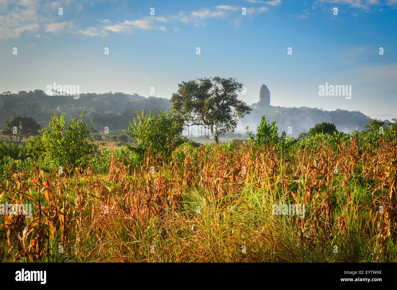 Corn (maize) fields in the Cuanza Sul province of Angola at sunrise - Stock Image