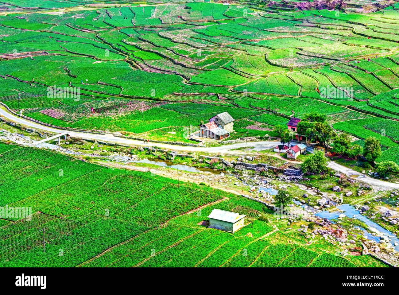 landscape of beautiful green potato fields or farmland on terraced highland at Daman, Palung, Nepal - Stock Image