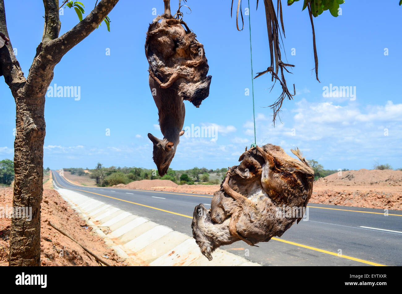 Bush meat (antelopes) hanging by a brand new tar road in Angola - Stock Image