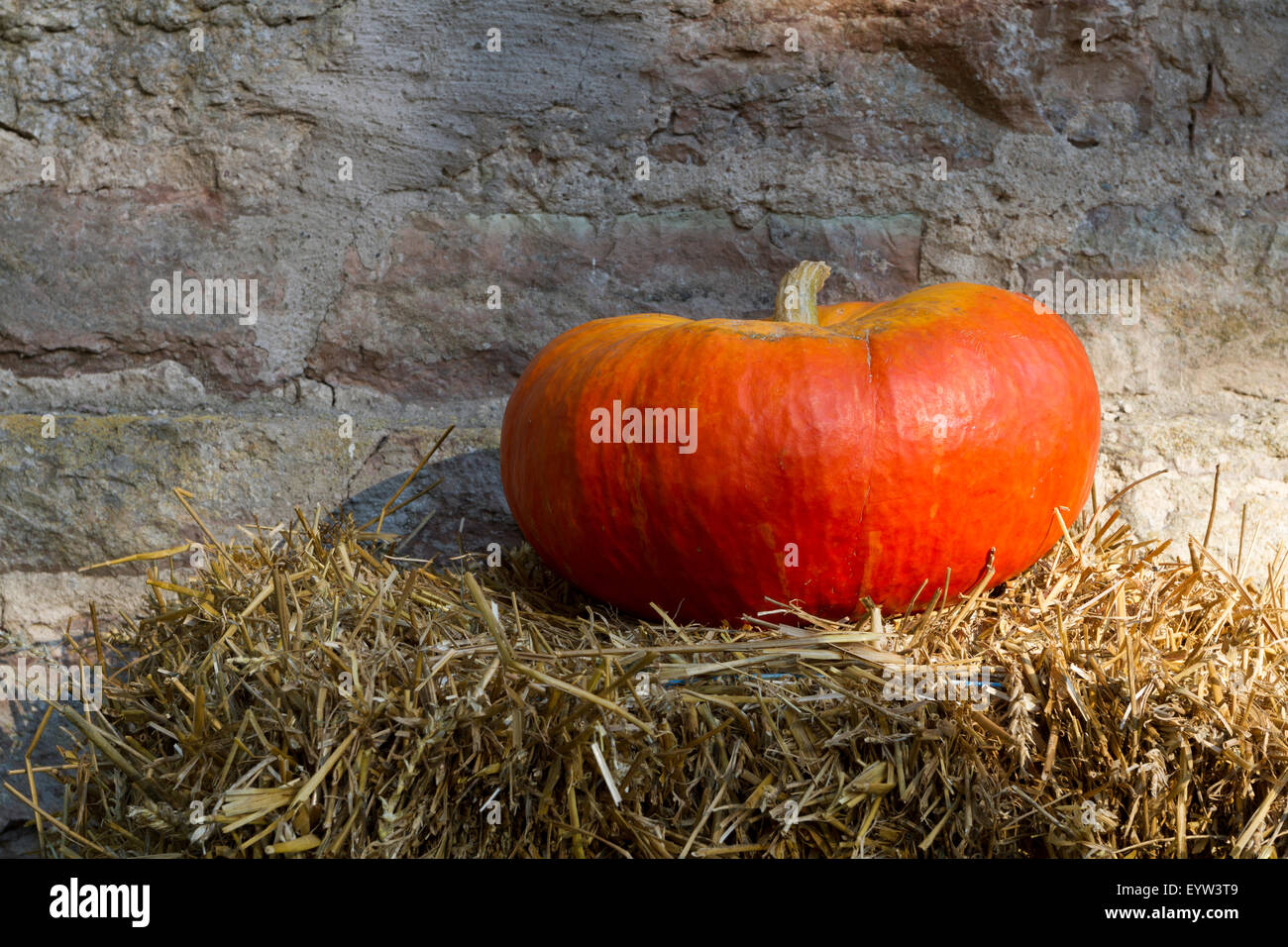 Pumpkin - Stock Image