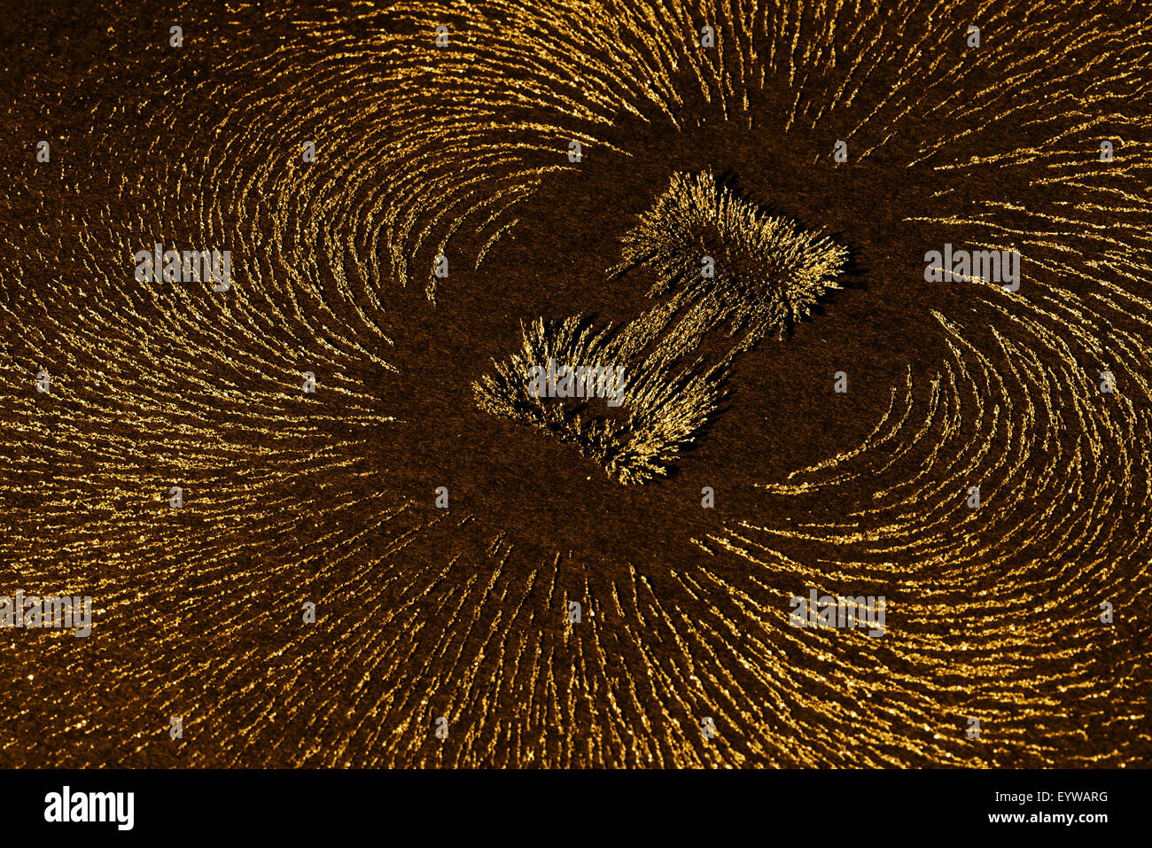 Attraction and repulsion iron metal particles align up along the magnetic fields lines created by horse shoe magnet - Stock Image