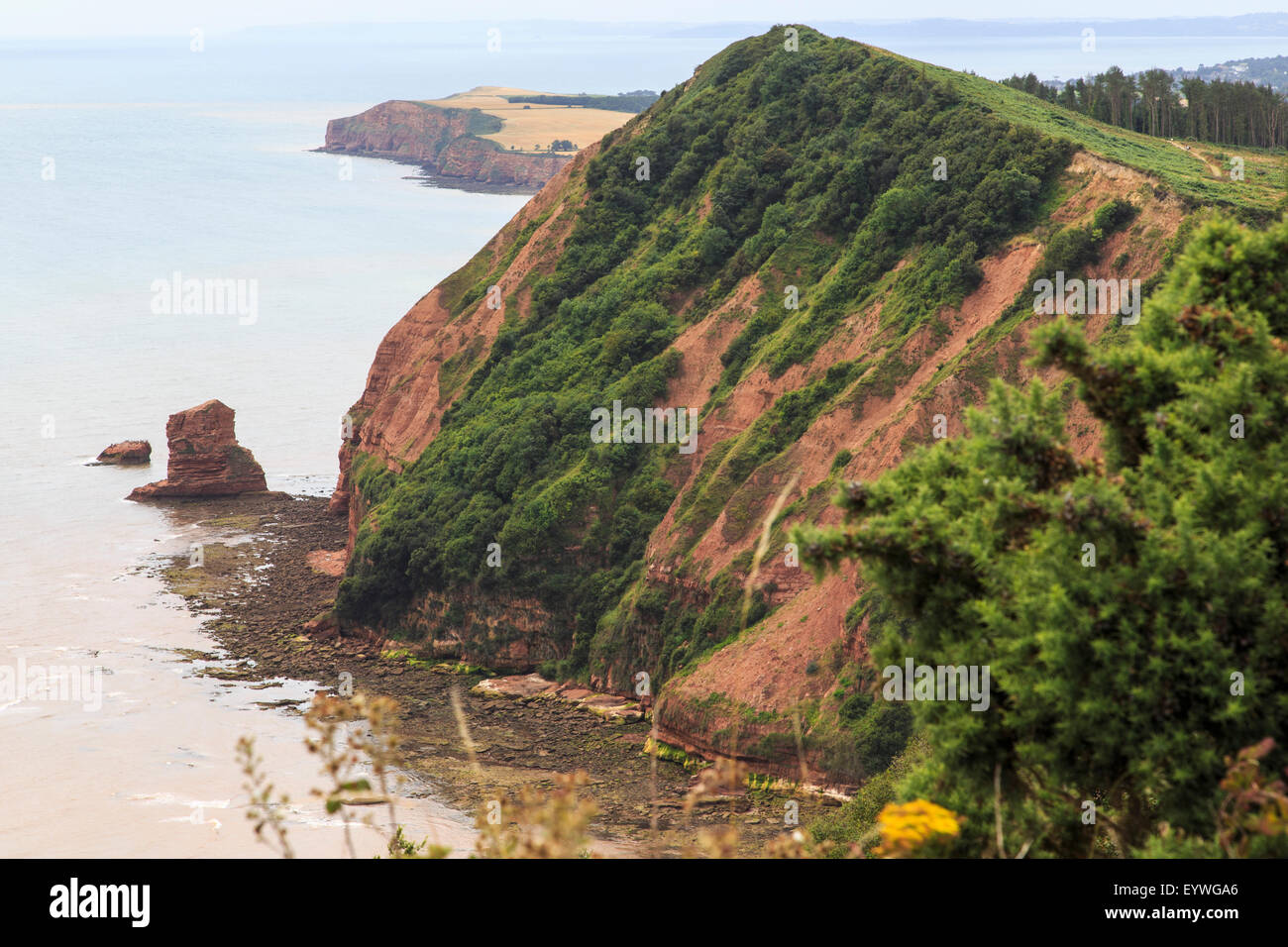 Hern Point Rock from High Peak, on the South West Coast Path, just above Sidmouth and looking towards Ladram Bay. Stock Photo