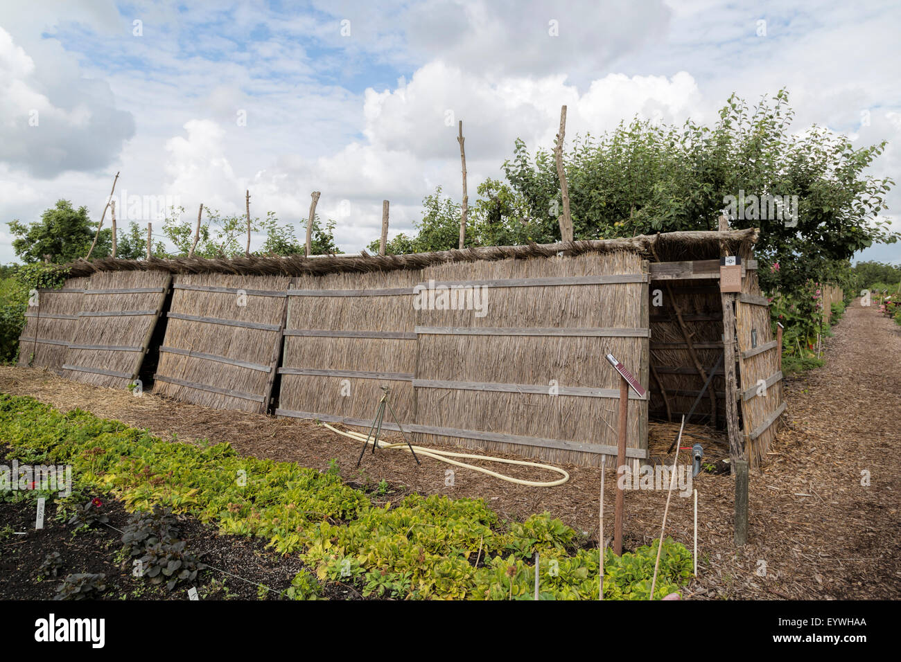 Drying storage for Gilliflowers in the Historical Garden Aalsmeer, a botanical garden in North Holland, The Netherlands. Stock Photo