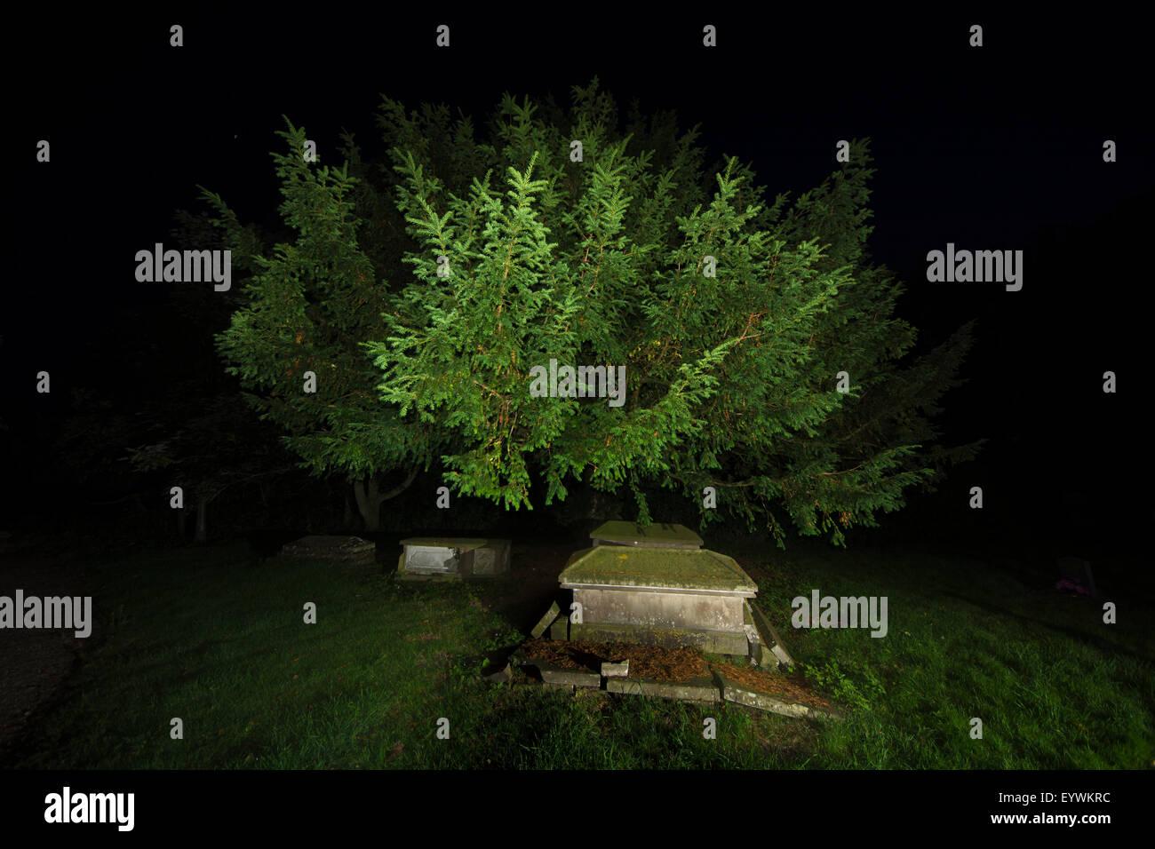 Church yard graveyard graves yew tree night - Stock Image