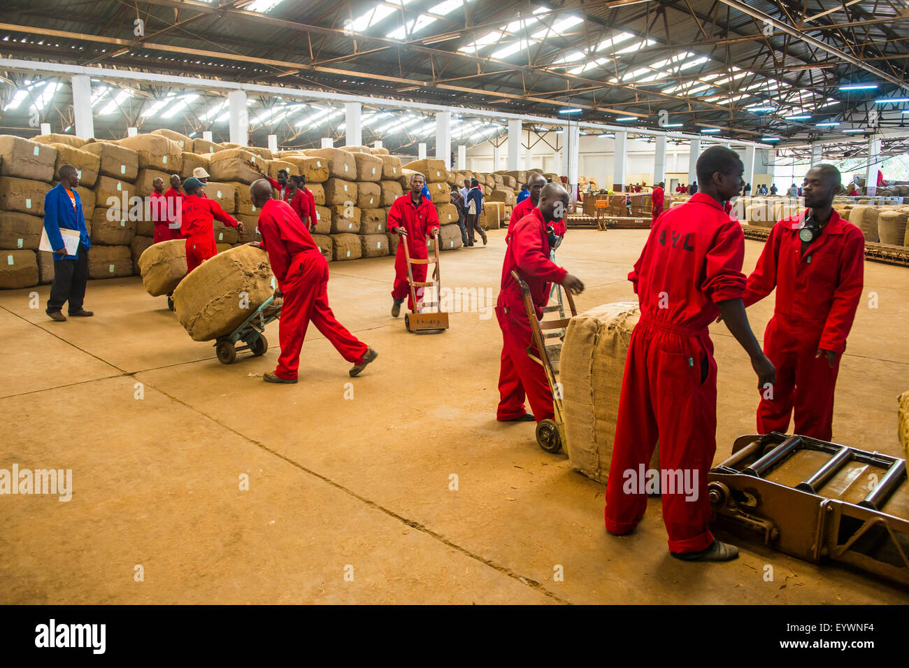 Local workers at a Tobacco auction in Lilongwe, Malawi, Africa - Stock Image