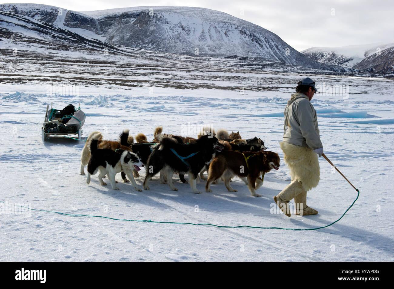 Inuit hunter walking his dog team on the sea ice, Greenland, Denmark, Polar Regions - Stock Image