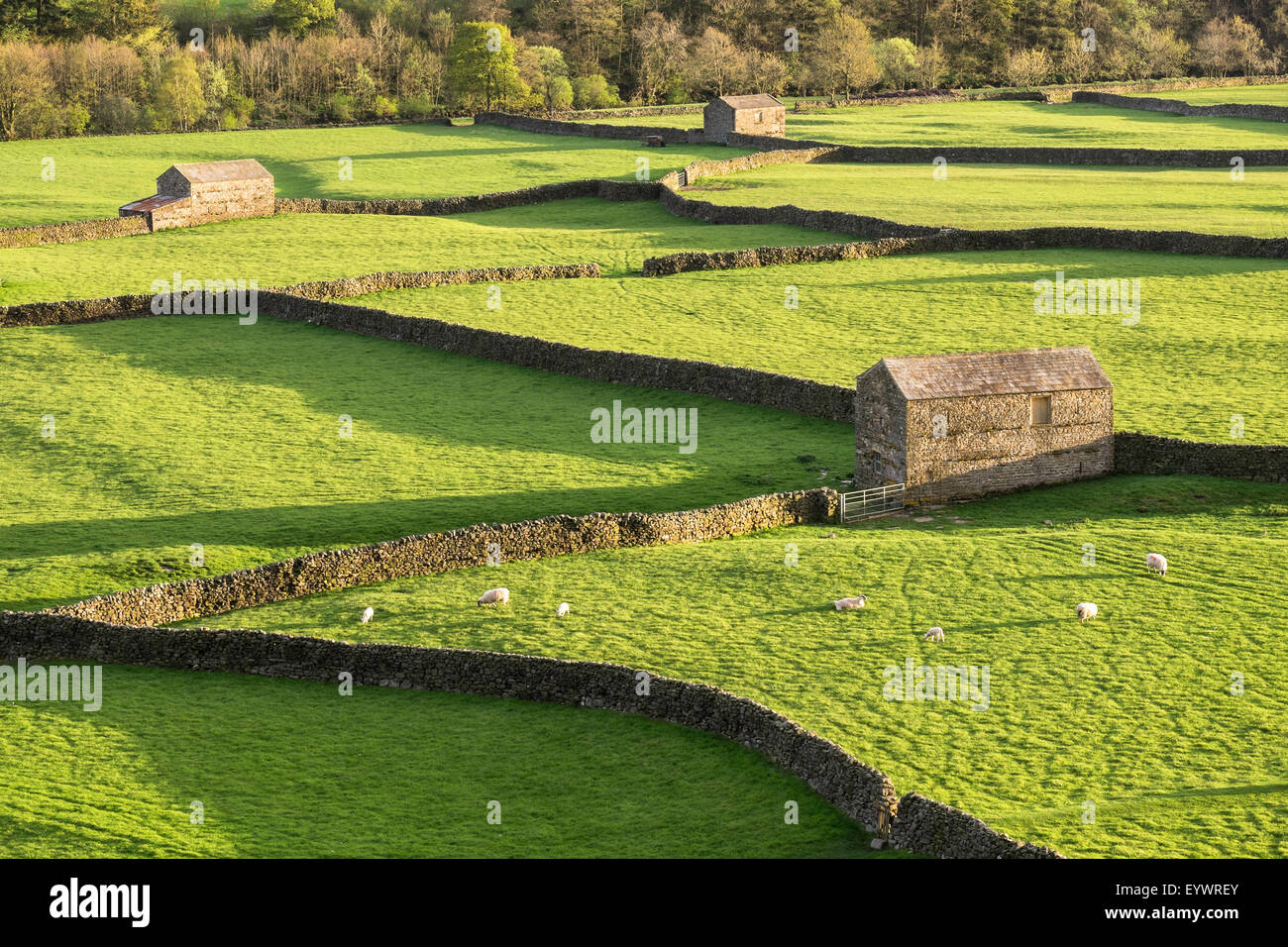 Barns and dry stone walls at Gunnerside, Swaledale, Yorkshire Dales, Yorkshire, England, United Kingdom, Europe - Stock Image