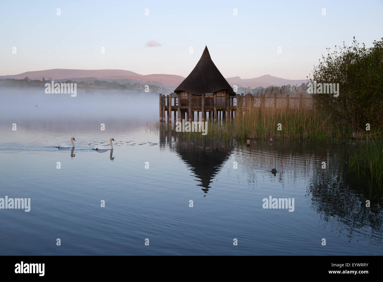 Llangorse Lake and Crannog Island in morning mist, Llangorse, Brecon Beacons National Park, Powys, Wales, United - Stock Image