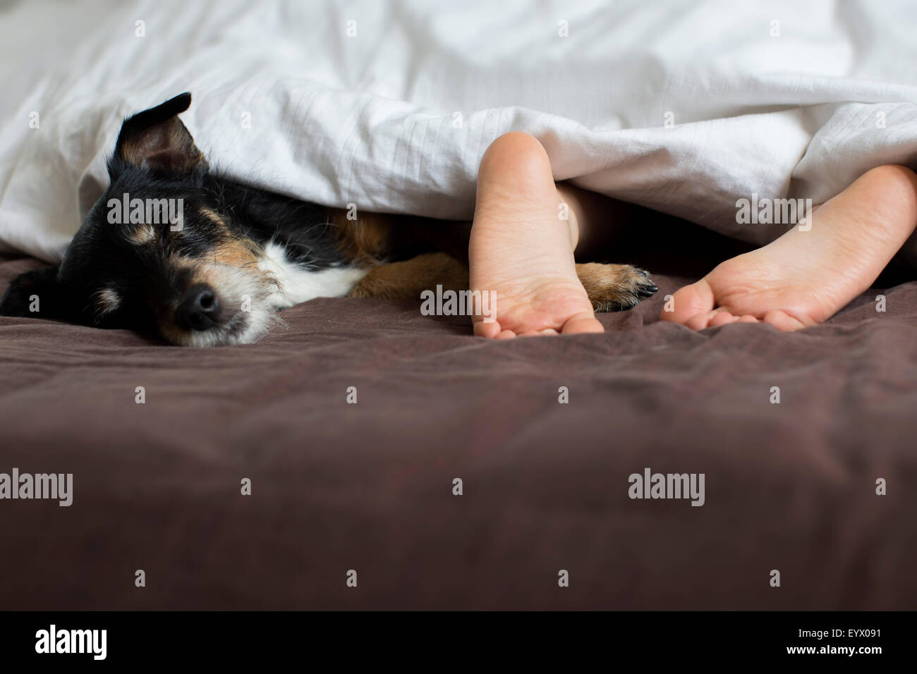 Child sleeping with dog in bed. - Stock Image