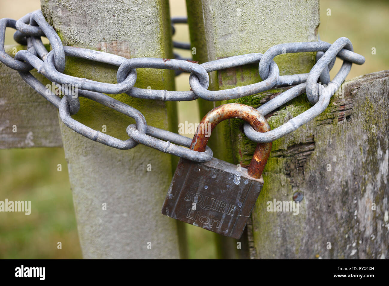 Padlock and chains keeping a gate shut. - Stock Image