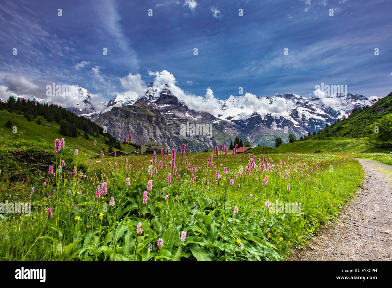 Swiss alpine meadows with mountain backdrop - Stock Image