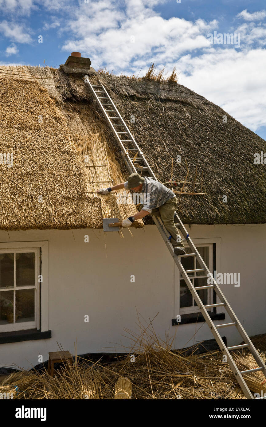 Thatching a  Cottage, Dunmore East Fishing Port, County Waterford, Ireland - Stock Image