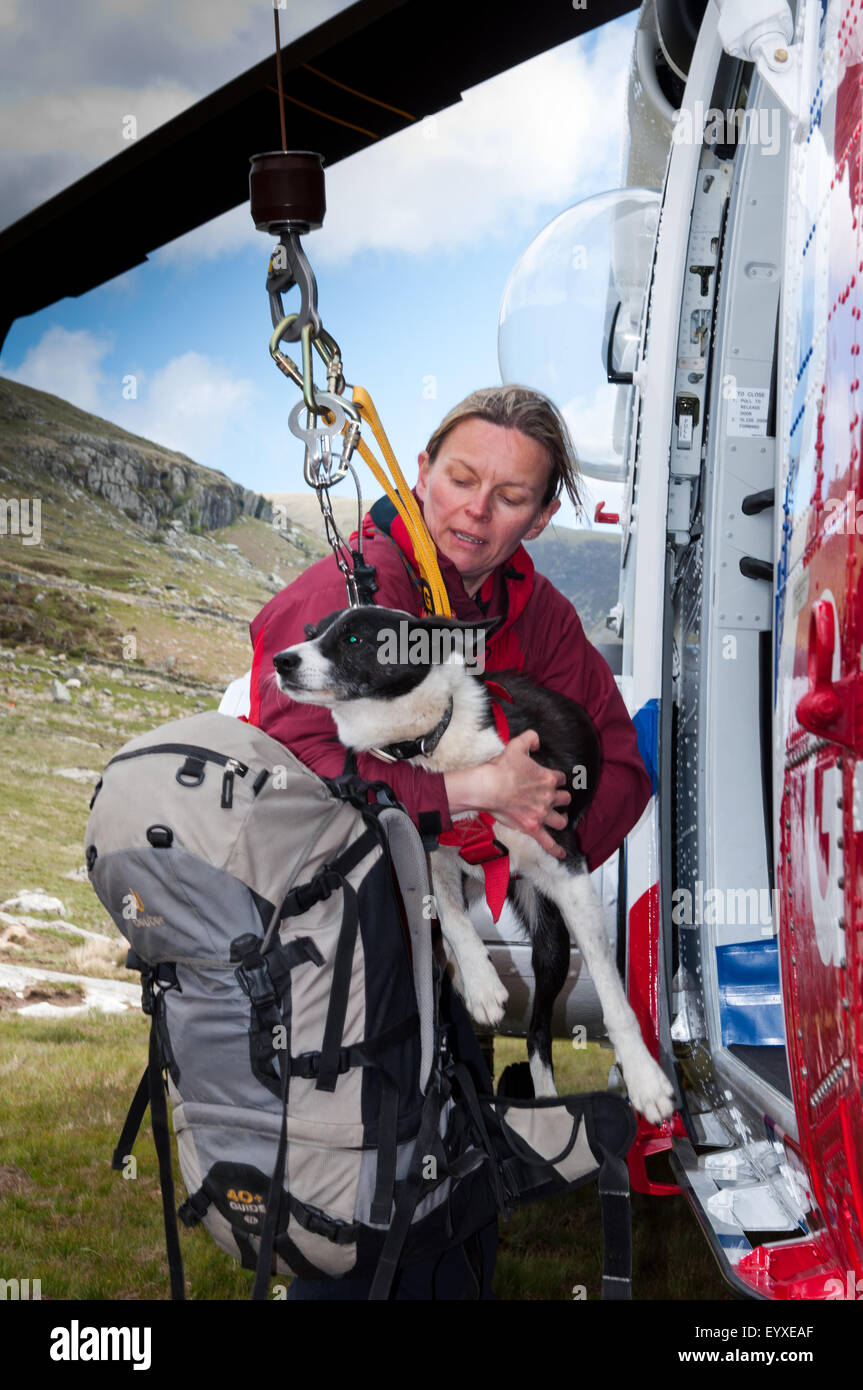 A mountain rescue dog handler practices placing her dog in the winch system of a Coastguard Sikorsky S-92 - Stock Image