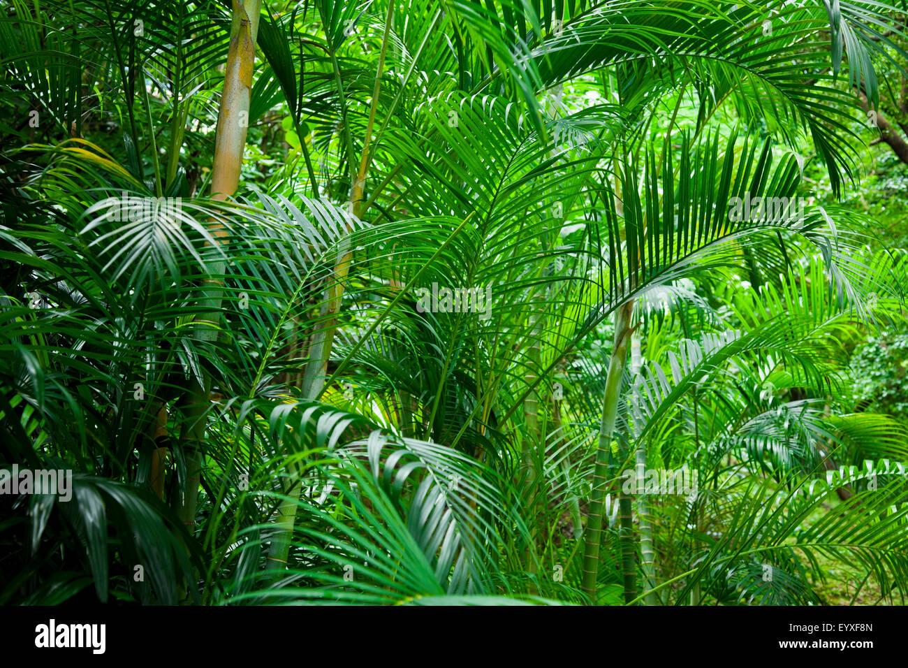 Tropical lush green palm tree jungle background Stock ...