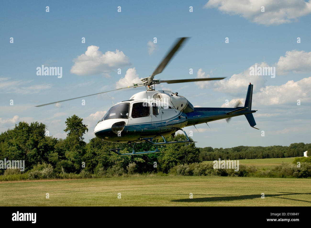 Blue and white helicopter taking off or landing in a field Stock Photo