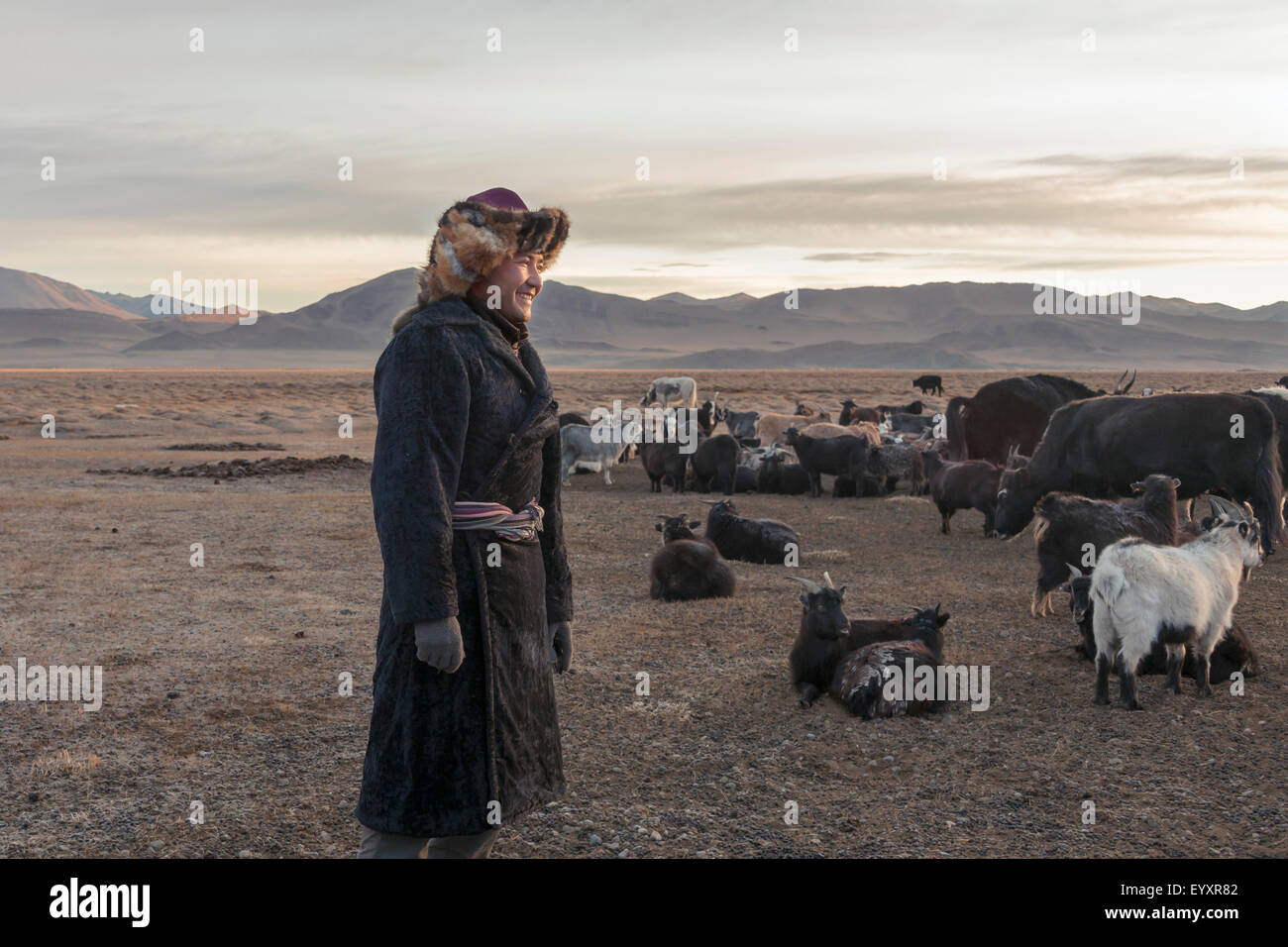 Sunrise with the herd, west of Olgii, Western Mongolia - Stock Image