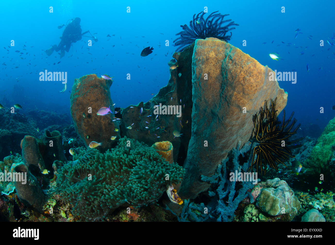 A diving photographer silhouetted in the background of a coral reef scene, Parigi Moutong, Central Sulawesi, Indonesia, - Stock Image