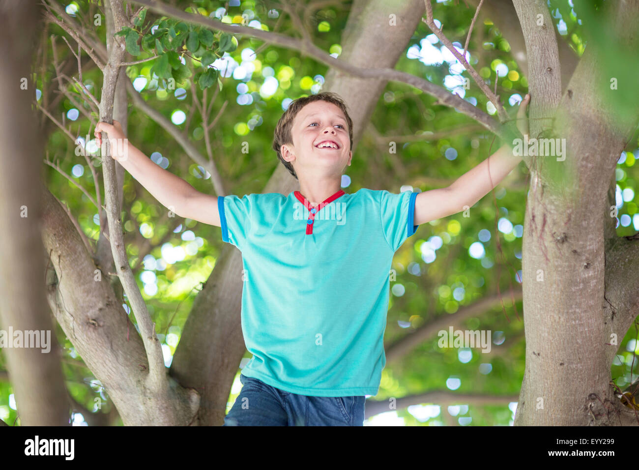 Low angle view of Caucasian boy climbing tree Stock Photo