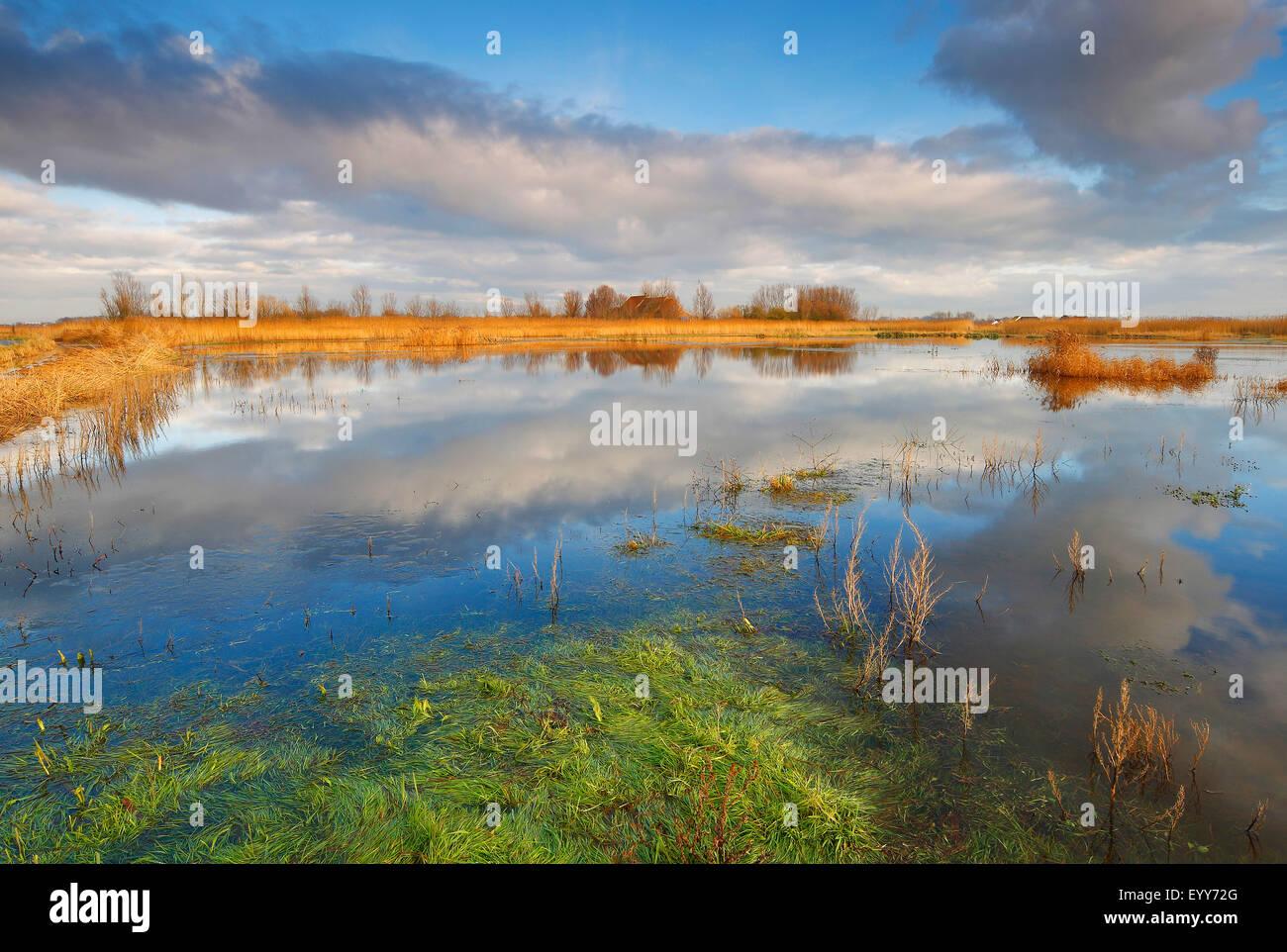 wetlands in Uitkerkse polder, Belgium - Stock Image