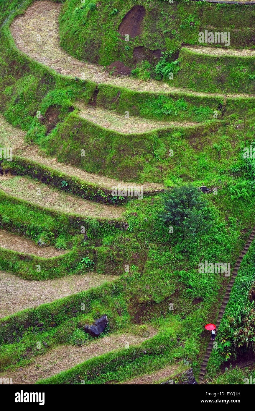 Batad Rice Terraces, Philippines, Luzon, Batad - Stock Image