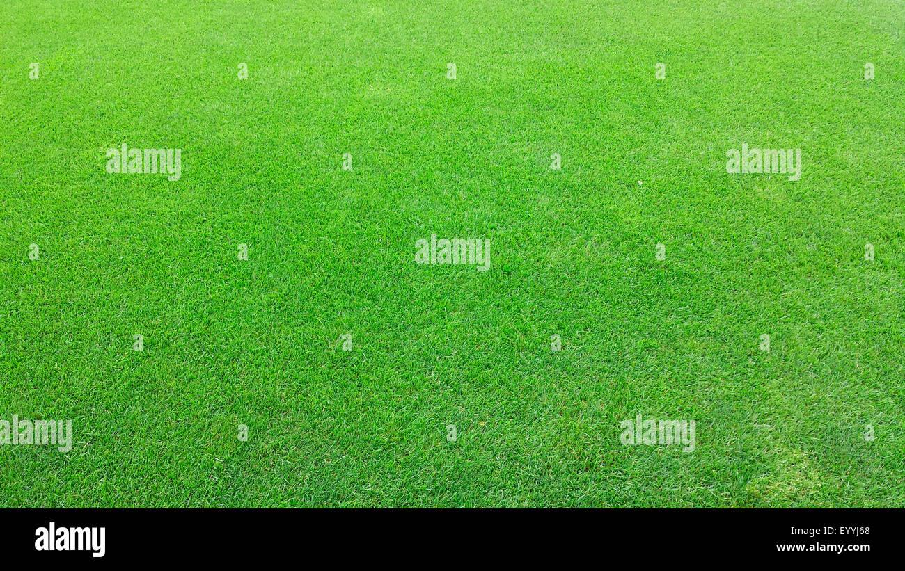 green ornamental lawn - Stock Image