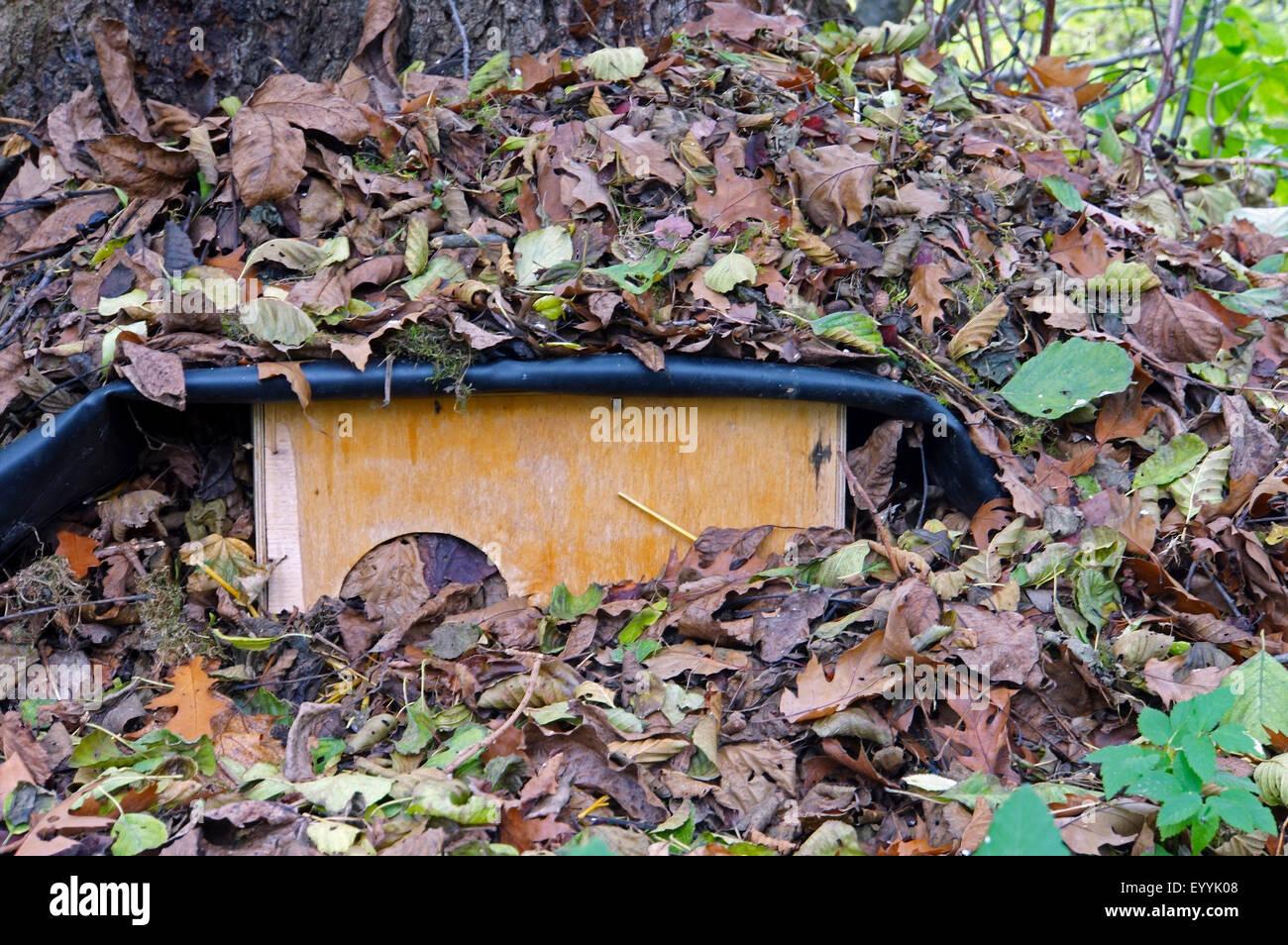 Western hedgehog, European hedgehog (Erinaceus europaeus), hedgehog house for overwintering, Germany, North Rhine - Stock Image