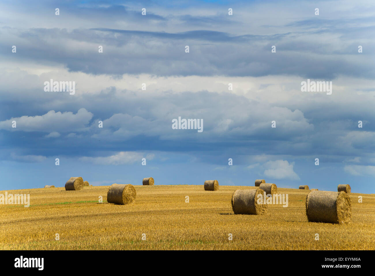 bales of straw on stubble field at upcoming thunderstorm, Germany, Saxony - Stock Image