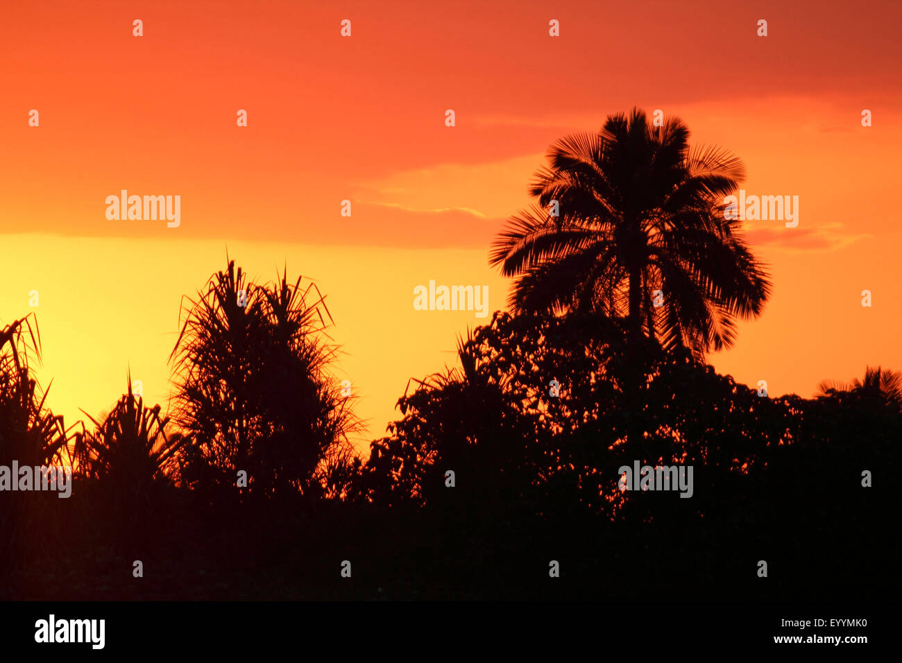 topical plants and palm tree in front of the sunrise, Madagascar, Isalo National Park - Stock Image