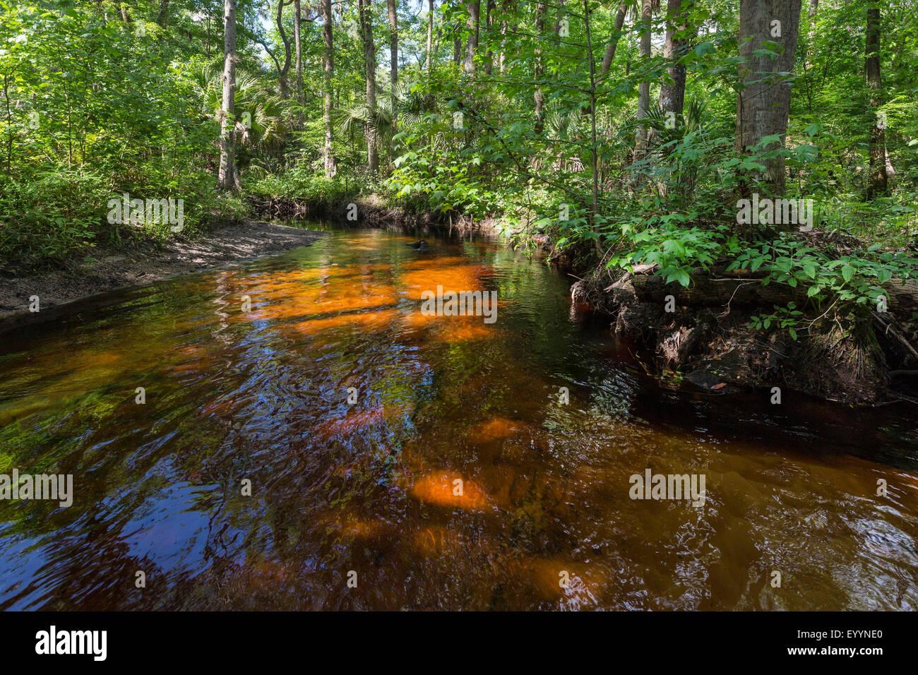 blackwater river with tropical vegetation, USA, Florida, Reedy Creek, Kissimmee - Stock Image