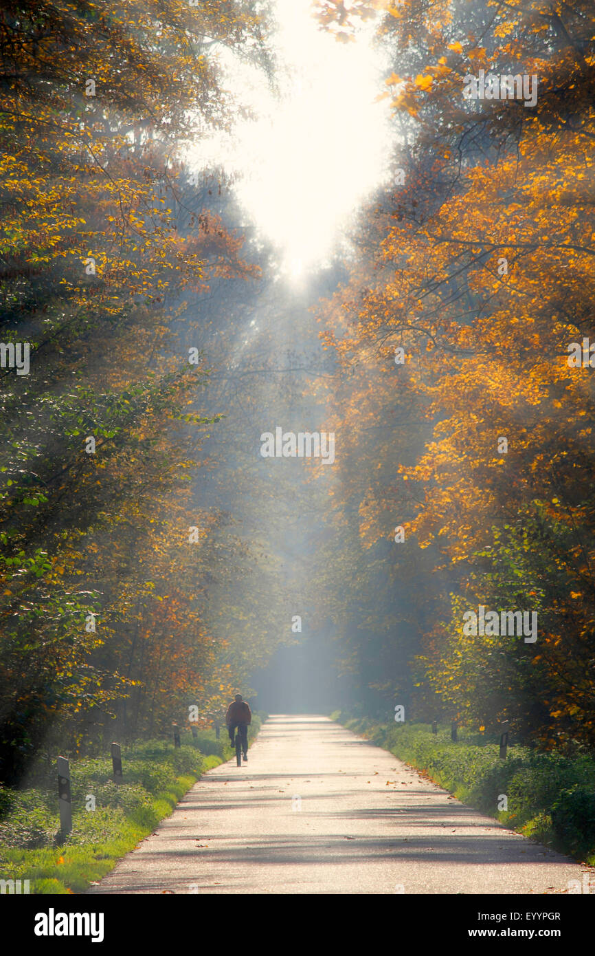 biker on a road through the forest in backlight with sunrays, Germany, Baden-Wuerttemberg, Ortenau - Stock Image