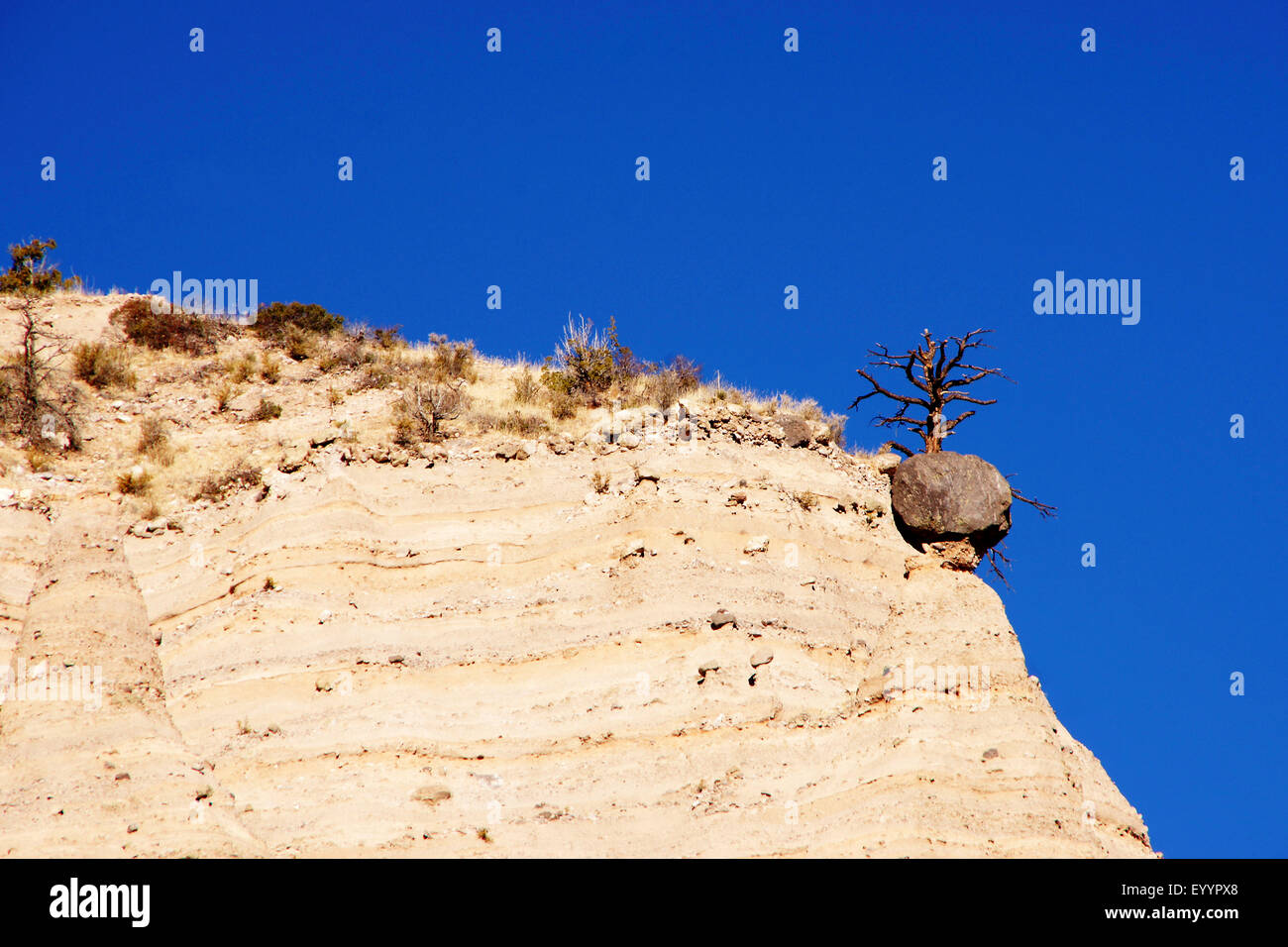 coniferous tree on slope with cloudless sky, USA, New Mexico, Kasha-Katuwe Tent Rocks National Monument - Stock Image
