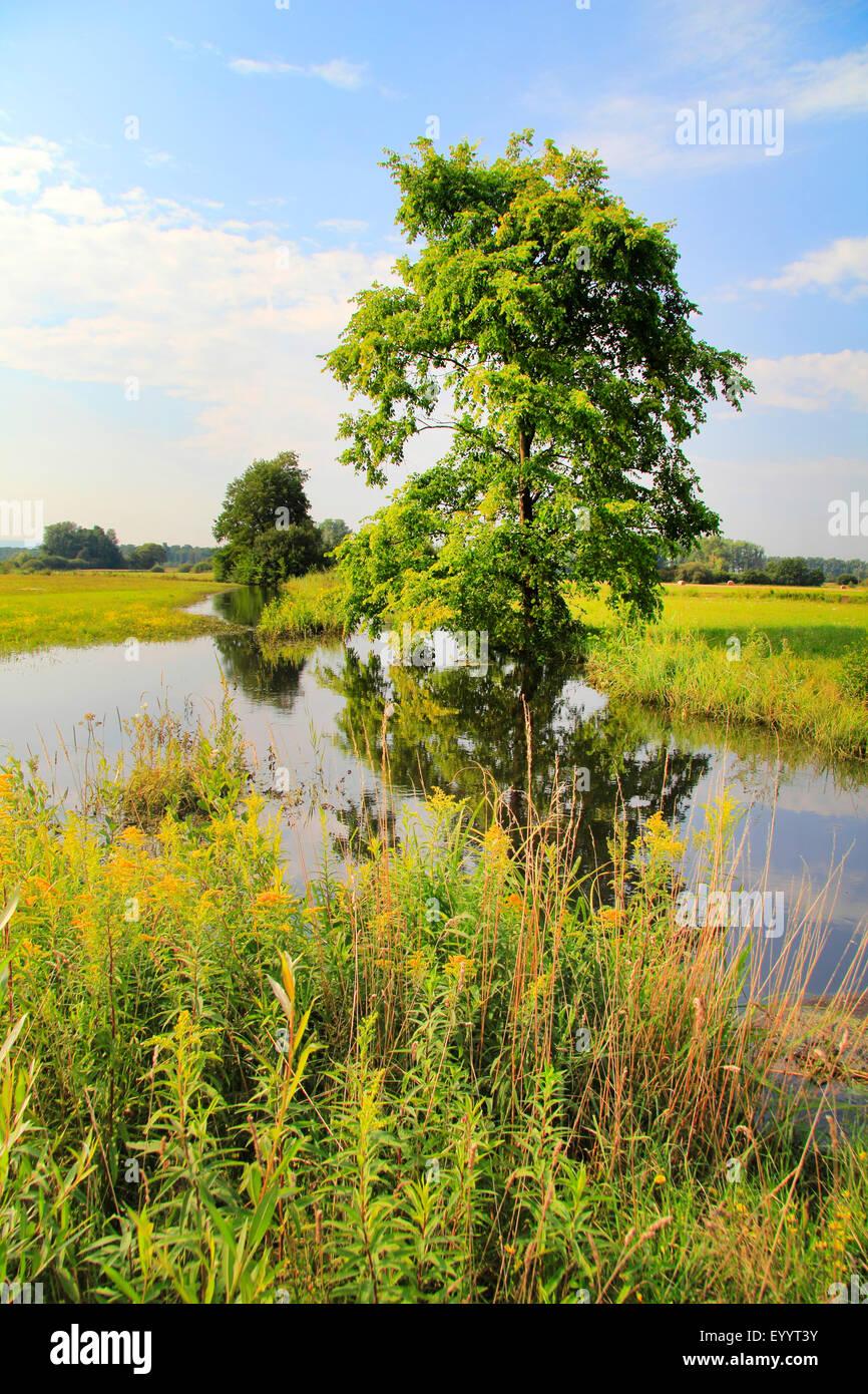 pastureland with tree, creek and fields, Germany, Baden-Wuerttemberg, Ortenau - Stock Image