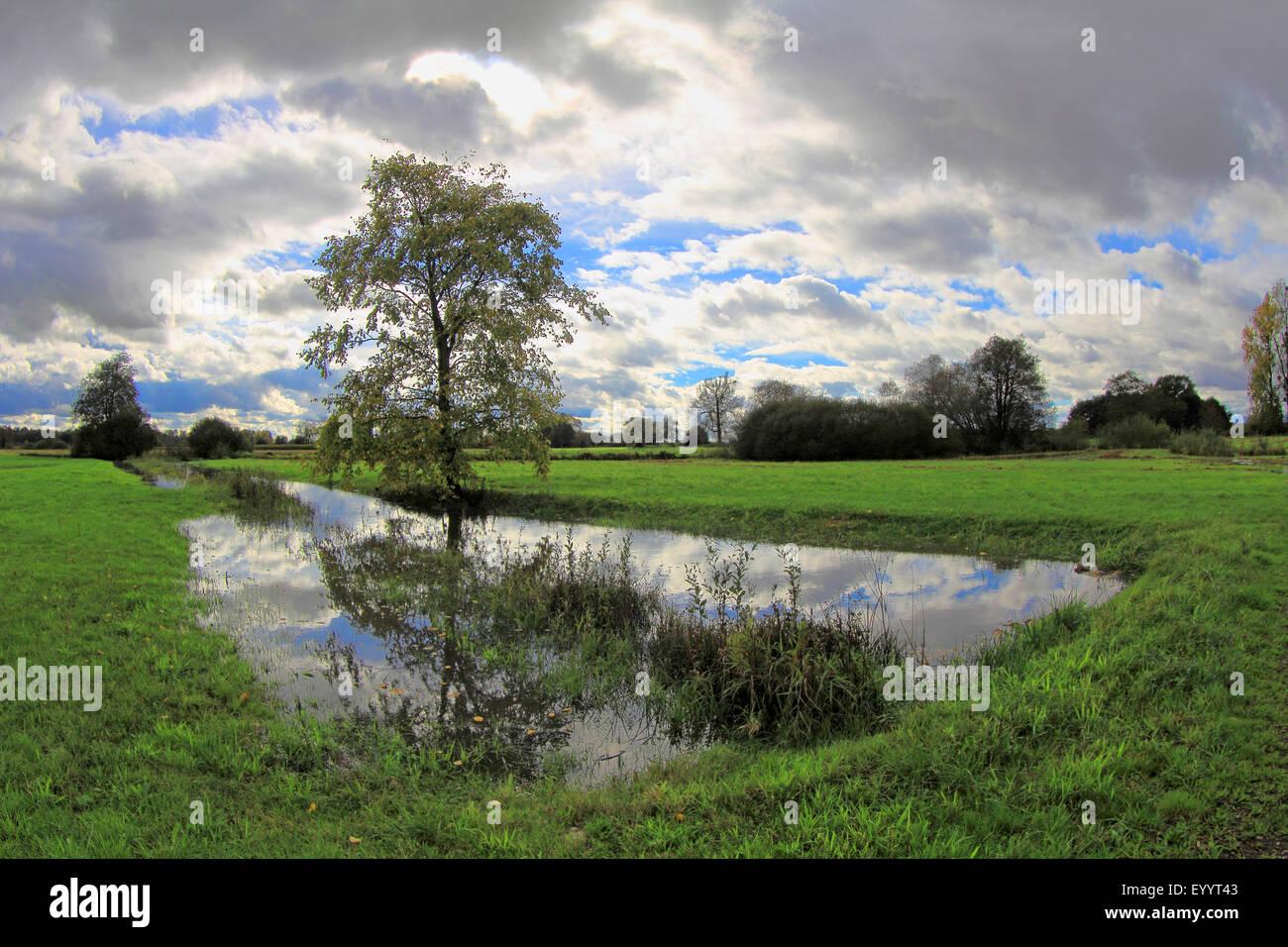pastureland with tree, creek , fields and cloudy sky, Germany, Baden-Wuerttemberg, Ortenau - Stock Image