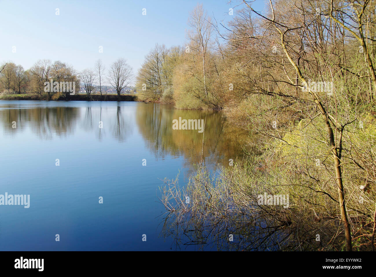 scrubby lakeside in springtime, Germany, Baden-Wuerttemberg, Offenburg - Stock Image