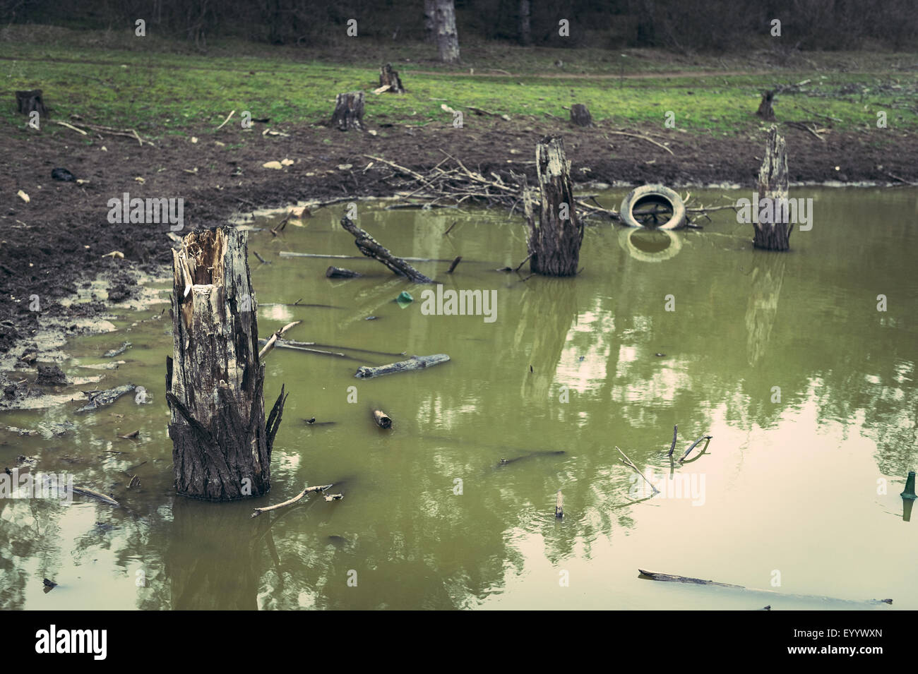 Tree stumps in a murky old lake. - Stock Image