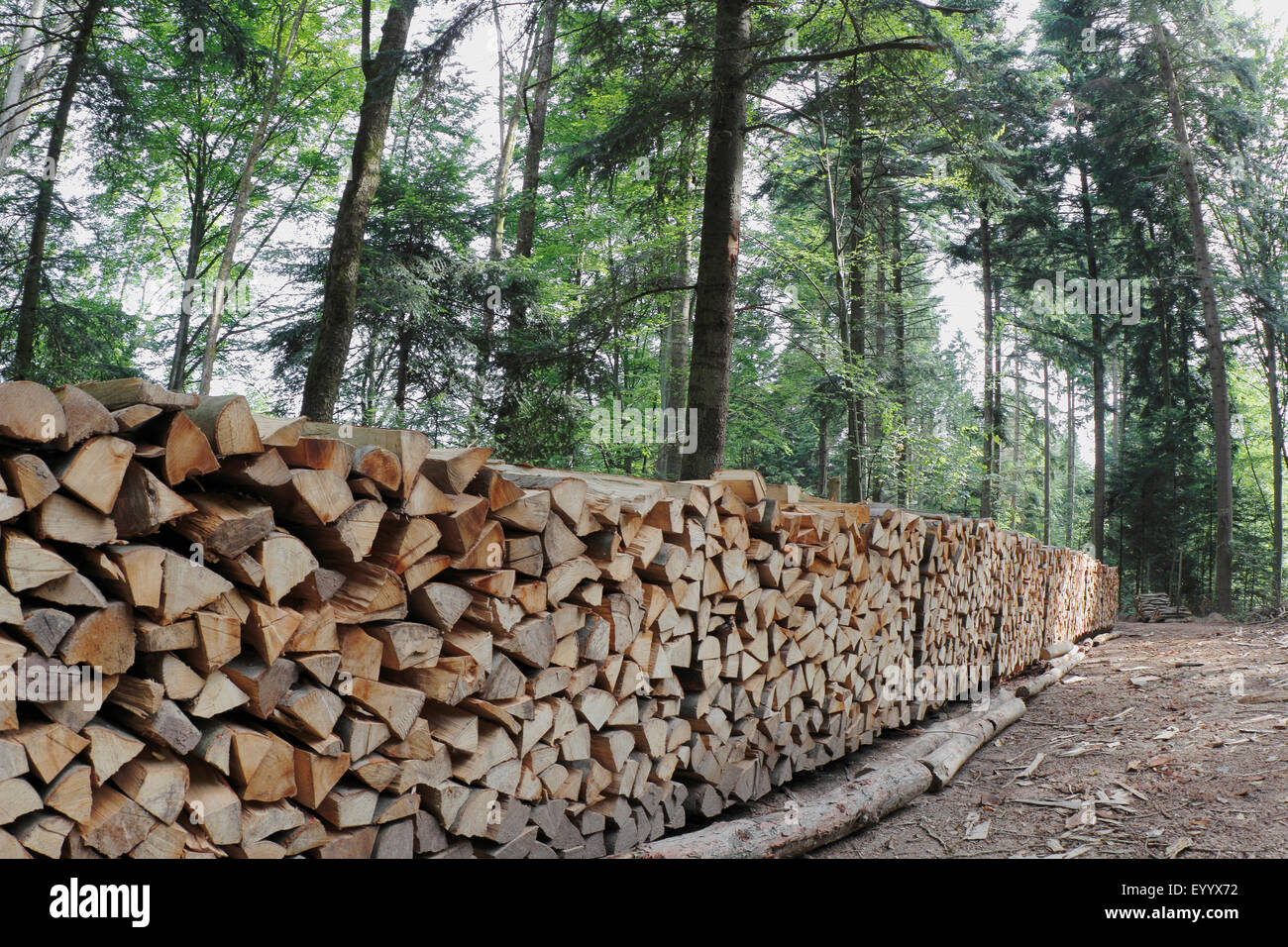 firewood ready to pickup in the forest, Germany - Stock Image