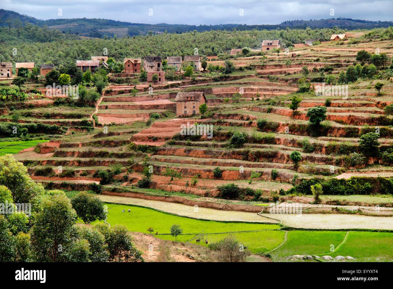 scenery with rice terraces and houses, Madagascar, Fianarantsoa - Stock Image