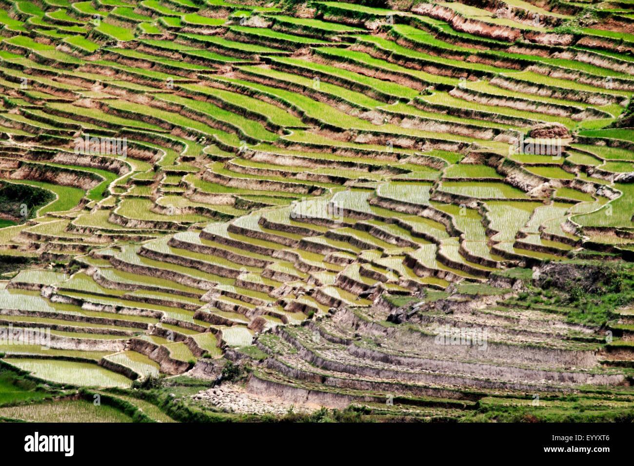 scenery with rice terraces, Madagascar, Fianarantsoa - Stock Image