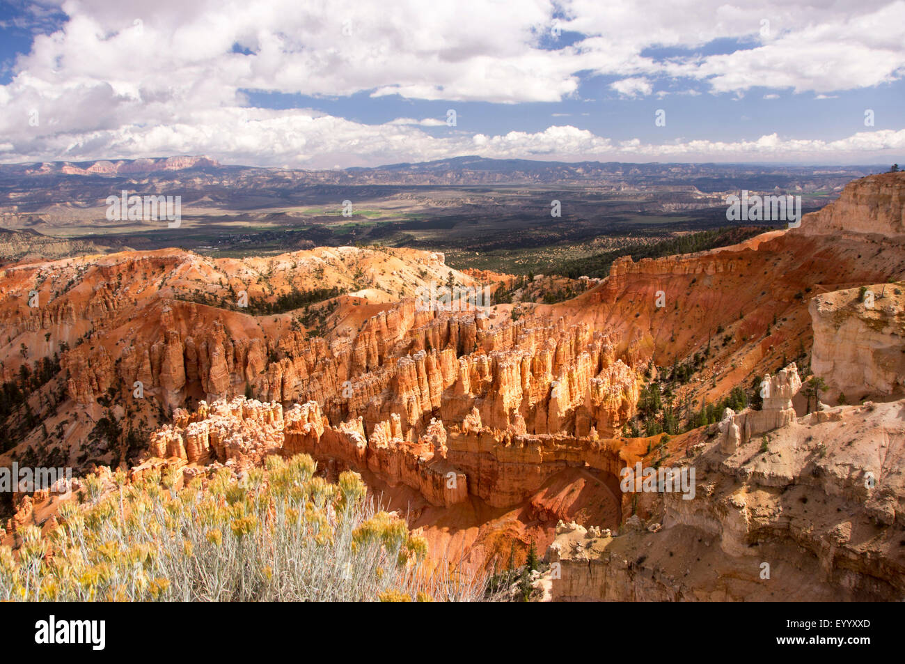 Amphitheatre of Bryce Canyon, USA, Utah, Bryce Canyon National Park - Stock Image