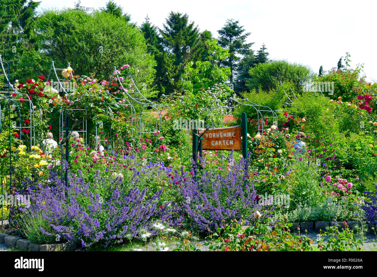 rose garden, arrange as a old english Yorkshire garden  , Germany - Stock Image