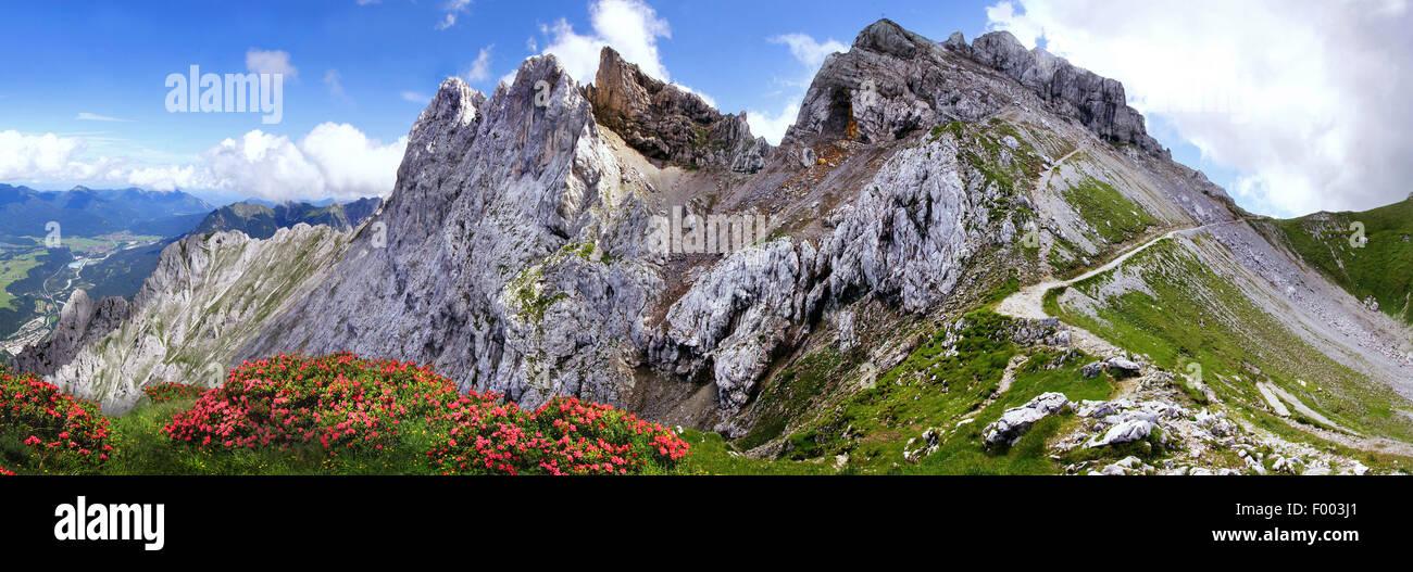 Karwendel mountain range with alpine roses, Germany, Bavaria, Mittenwald - Stock Image