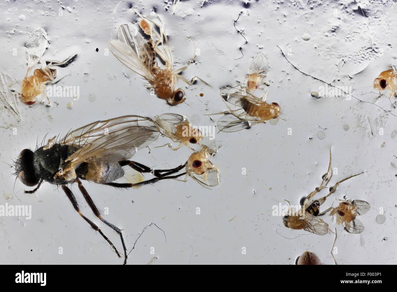 Fly Trap Stock Photos & Fly Trap Stock Images - Alamy
