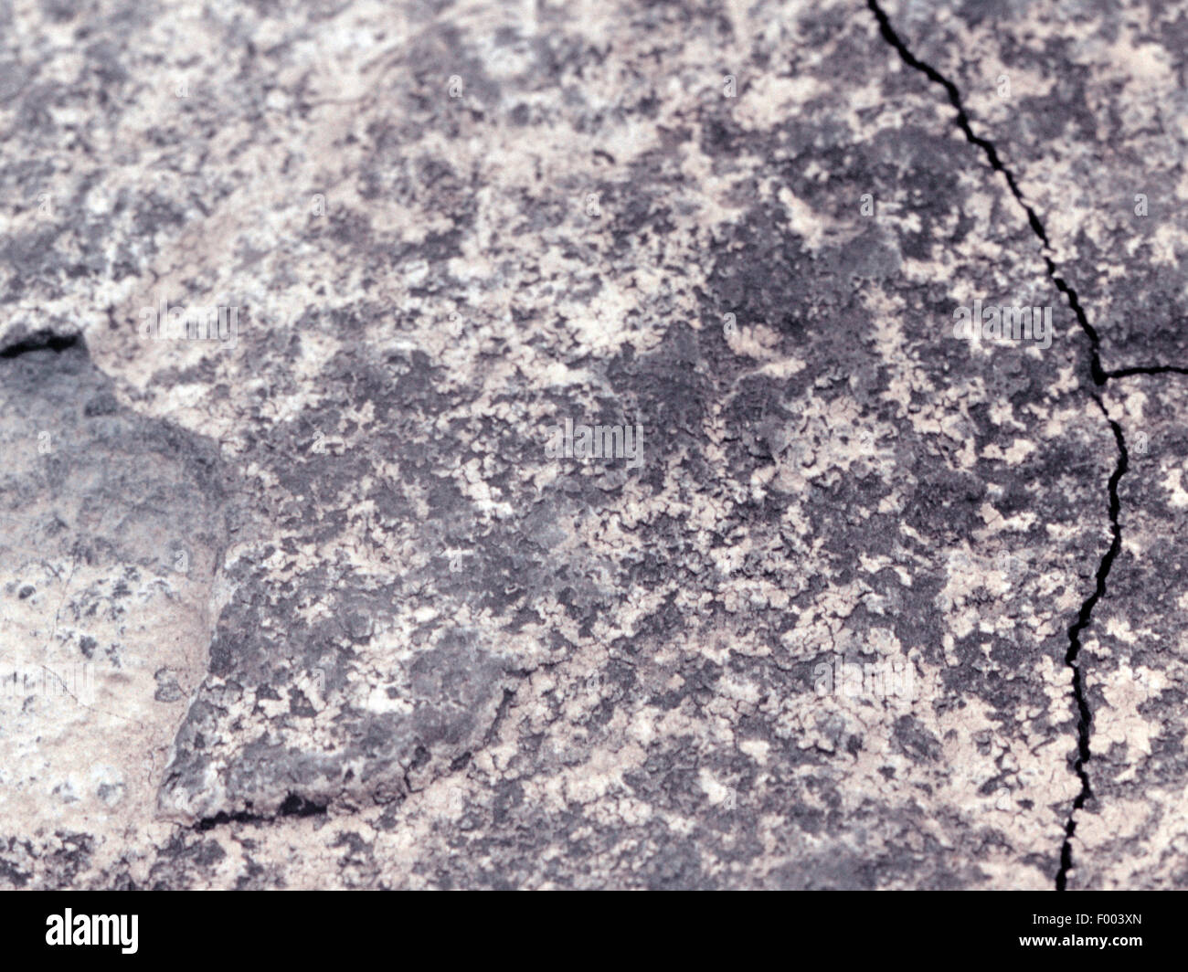 copper shale, Central Europe - Stock Image