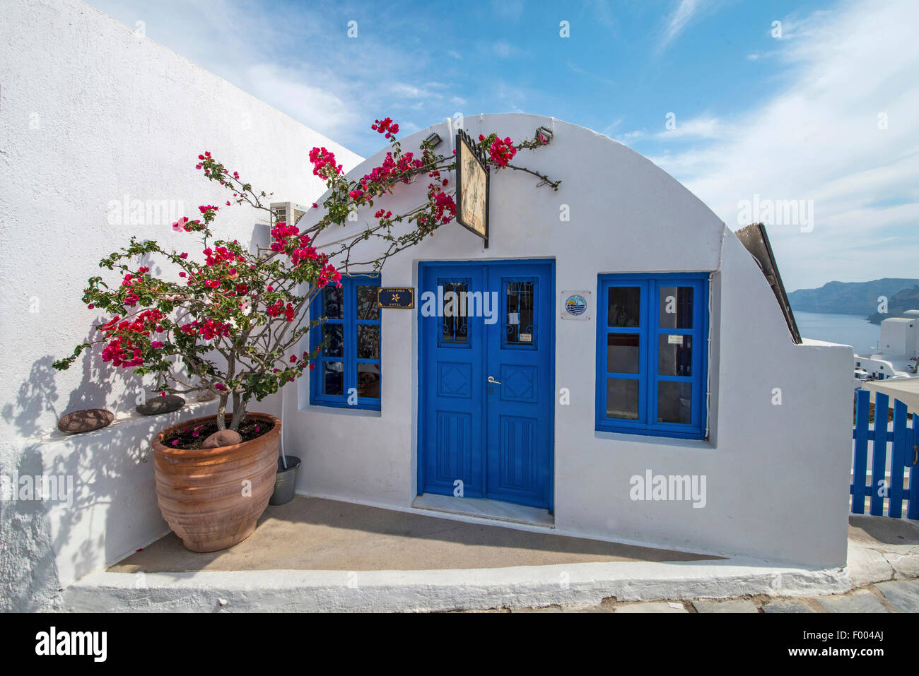 paper plant, four-o'clock (Bougainvillea spec.), little white house with blue windows and door, pot with a four - Stock Image