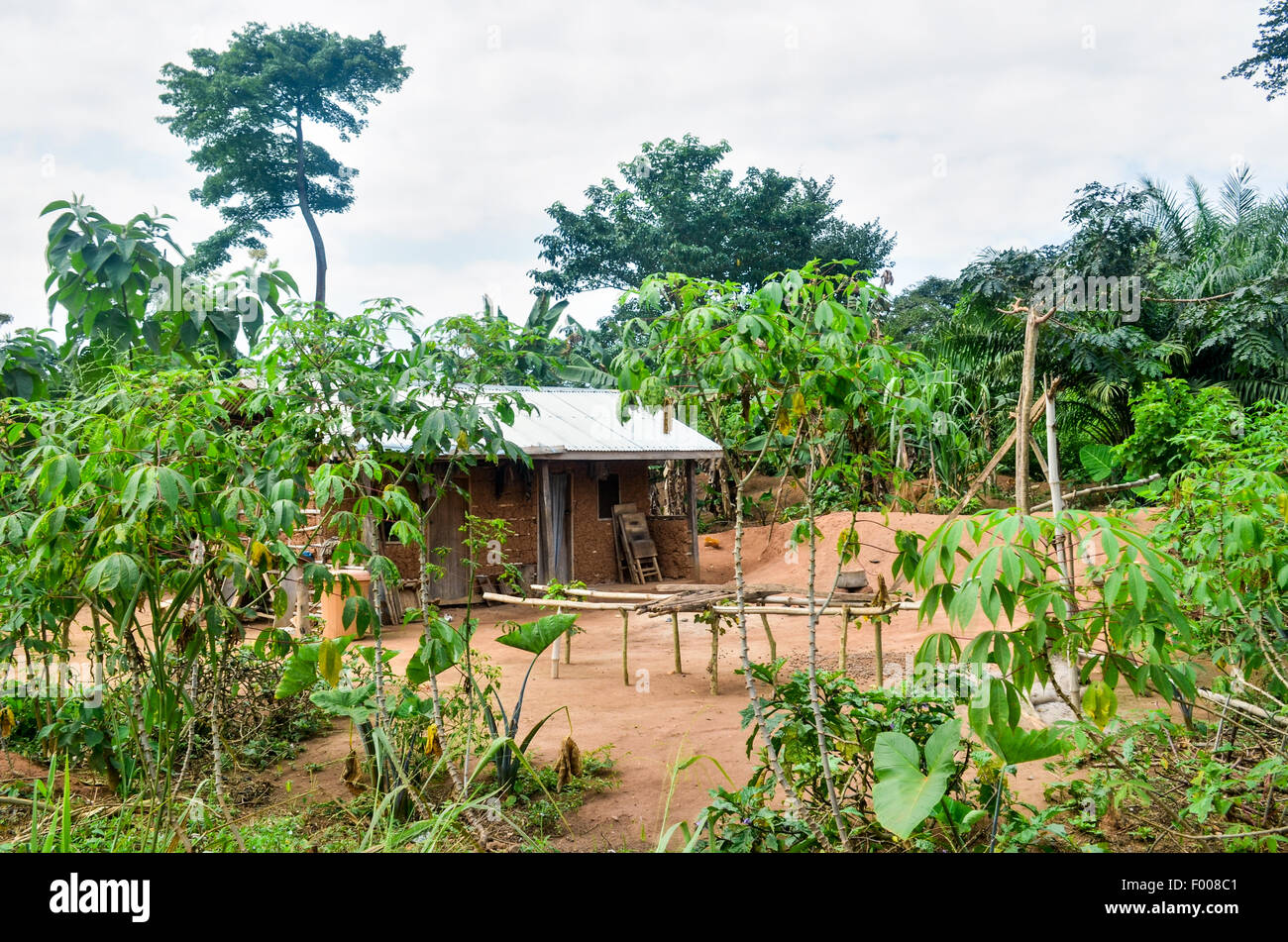 A mud house surrounded by cassava plants in the countryside of Ghana - Stock Image