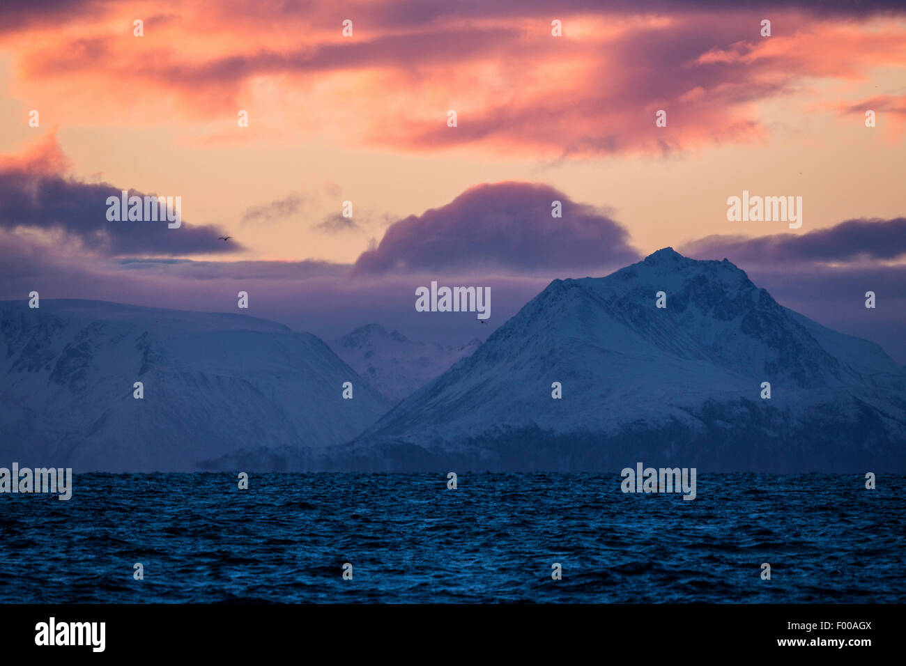 fjord in polar night, Norway, Vester�len, Insel And�ya Stock Photo