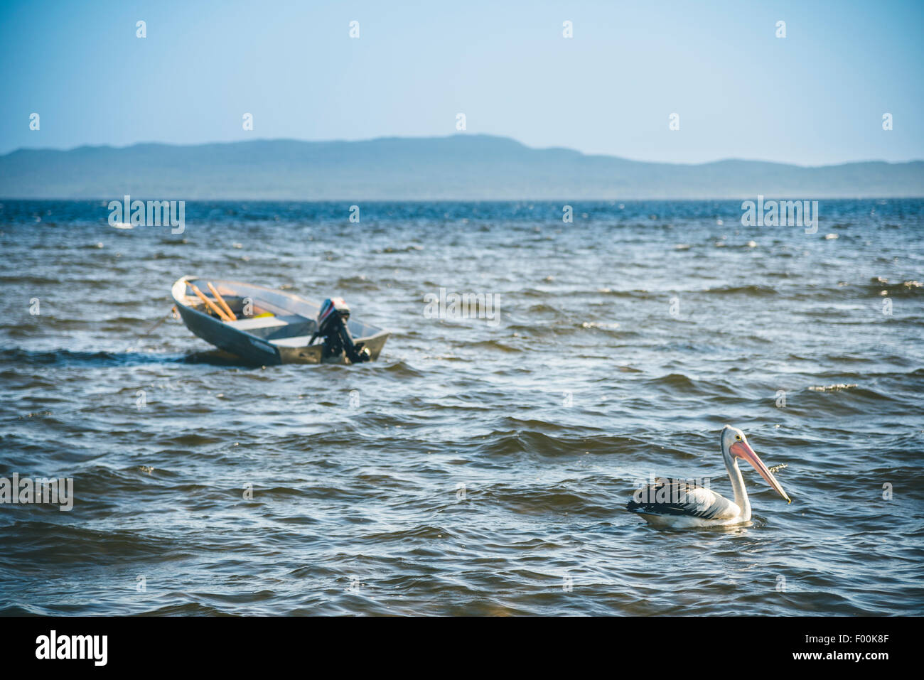 Pelican and small motor boat floating on the sea, in the inlet of Walpole Stock Photo