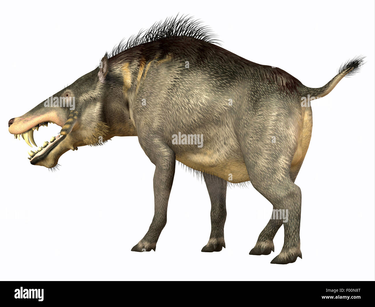 Entelodon was an omnivorous pig that lived in Europe and Asia in the Eocene through the Oligocene Periods. - Stock Image